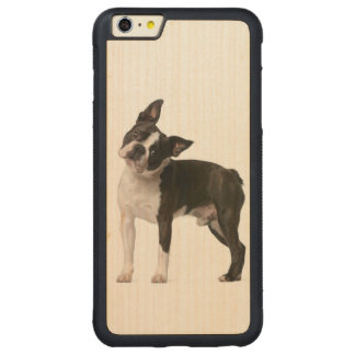 French bulldog - puppy dog - frenchie dog carved maple iPhone 6 plus bumper case