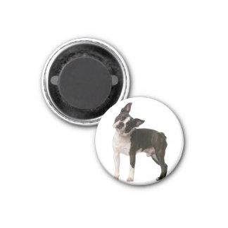 French bulldog - puppy dog - frenchie dog magnet