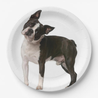 French bulldog - puppy dog - frenchie dog paper plate
