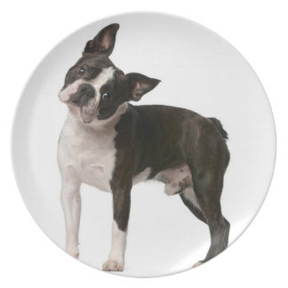 French bulldog - puppy dog - frenchie dog plate