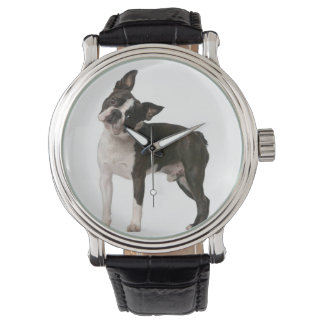 French bulldog - puppy dog - frenchie dog watch