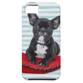 French Bulldog Puppy Portrait iPhone 5 Case
