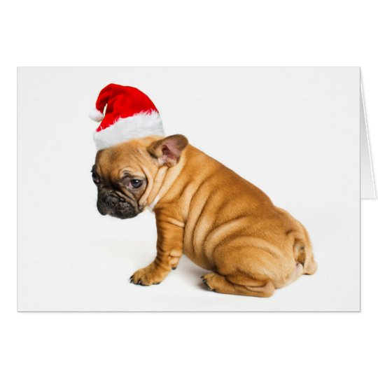 French bulldog puppy wearing a Santa Claus hat Card