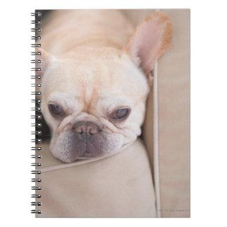 French bulldog resting on sofa notebook