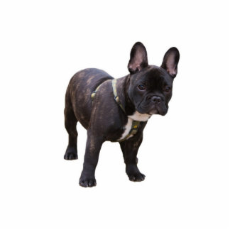 French Bulldog sculpture, gift idea Standing Photo Sculpture