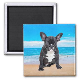 French Bulldog Sitting On Beach Magnet