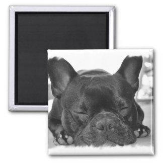 French Bulldog Square Magnet Fridge Magnet