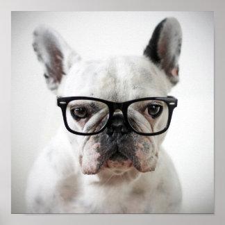 French Bulldog Wearing Black Eye Glasses Poster