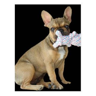 French Bulldoggen postcard