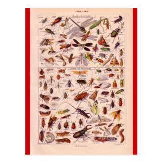French Encyclopedia 1920, Insects Postcard