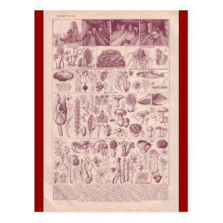 French Encyclopedia 1920, Mushrooms Postcard
