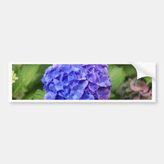 French hydrangea (Hydrangea macrophylla) Bumper Sticker