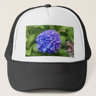 French hydrangea (Hydrangea macrophylla) Trucker Hat