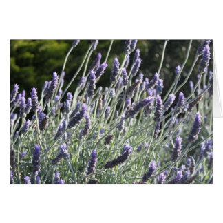French Lavender Card