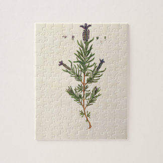 French Lavender, plate 241 from 'A Curious Herbal' Jigsaw Puzzle