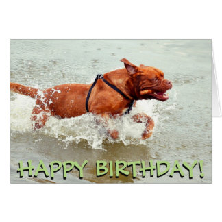 French Mastiff birthday card