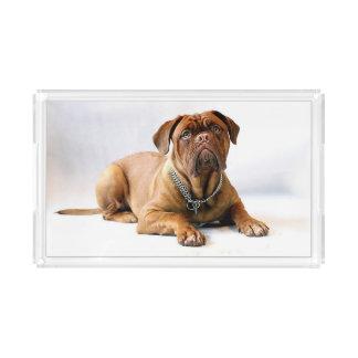 French Mastiff Dogue de Bourdeaux Deadpan Dog Acrylic Tray