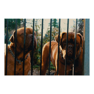 French Mastiff Pair on Guard at Gate Poster