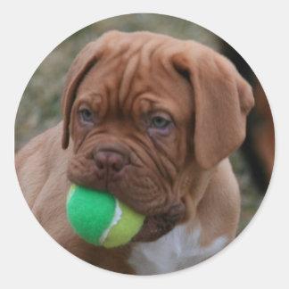 French Mastiff Puppy Classic Round Sticker
