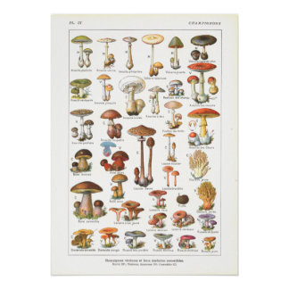 French Poisonous Edible Mushrooms Variety Print