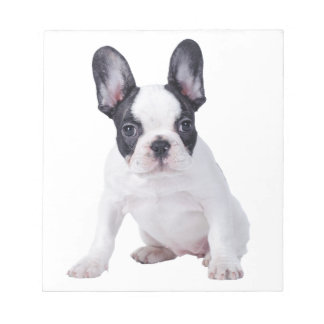 Frenchie - French bulldog puppy Notepad