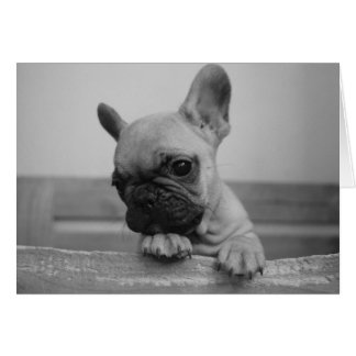 Frenchie puppy card