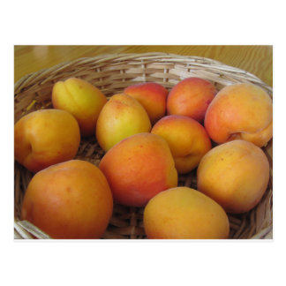 Fresh apricots in a wicker basket postcard