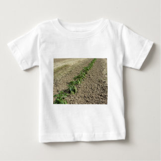 Fresh basil plants growing in the field baby T-Shirt