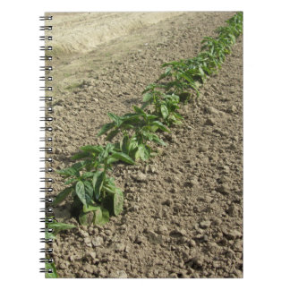 Fresh basil plants growing in the field notebooks