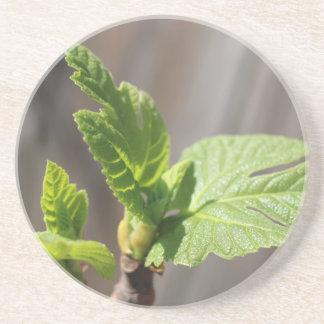 Fresh Fig Leaf Coaster