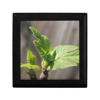Fresh Fig Leaf Gift Box