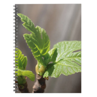Fresh Fig Leaf Notebook