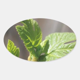 Fresh Fig Leaf Oval Sticker
