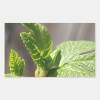 Fresh Fig Leaf Rectangular Sticker