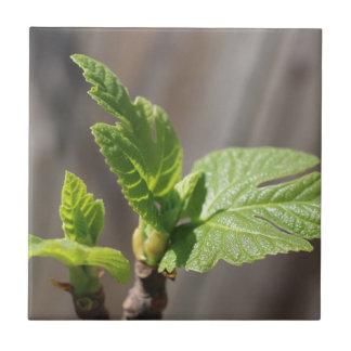 Fresh Fig Leaf Small Square Tile