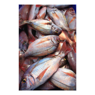 Fresh fish photo art