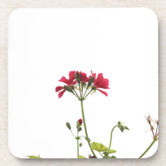Fresh Flower Coaster