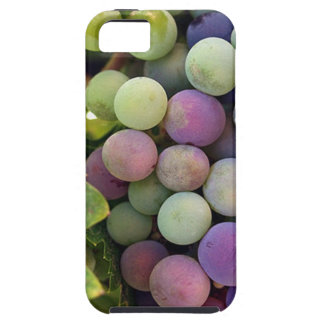 Fresh Grapes and Wine iPhone 5 Covers