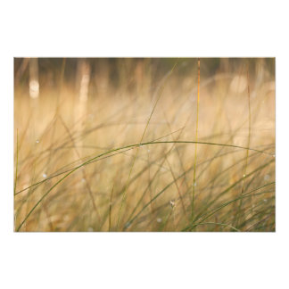 Fresh grass blade art photo