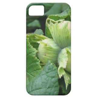 Fresh green hazelnuts are growing on the tree barely there iPhone 5 case