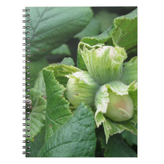 Fresh green hazelnuts are growing on the tree notebook