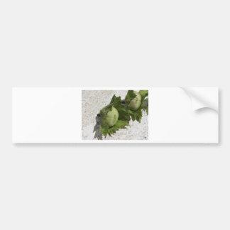 Fresh green hazelnuts on the floor bumper sticker