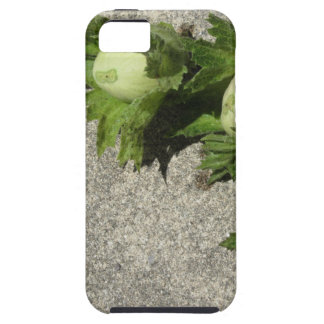 Fresh green hazelnuts on the floor iPhone 5 cases