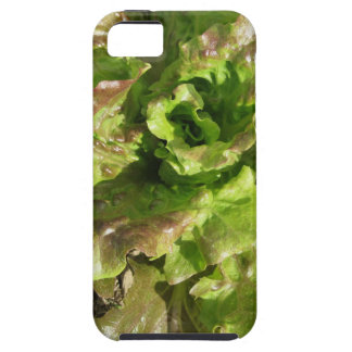 Fresh lettuce growing in the field. Tuscany, Italy iPhone 5 Covers