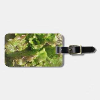 Fresh lettuce growing in the field. Tuscany, Italy Luggage Tag