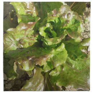 Fresh lettuce growing in the field. Tuscany, Italy Napkin
