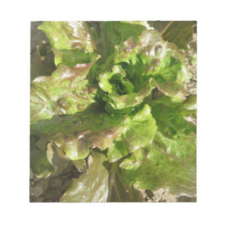 Fresh lettuce growing in the field. Tuscany, Italy Notepad