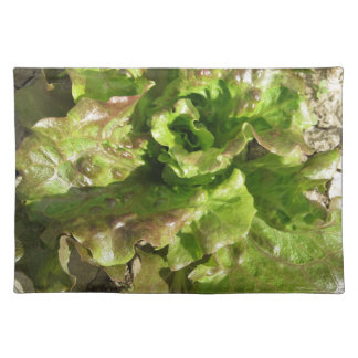 Fresh lettuce growing in the field. Tuscany, Italy Placemat