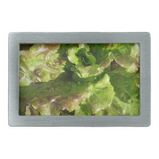 Fresh lettuce growing in the field. Tuscany, Italy Rectangular Belt Buckle