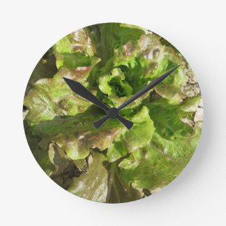 Fresh lettuce growing in the field. Tuscany, Italy Round Clock